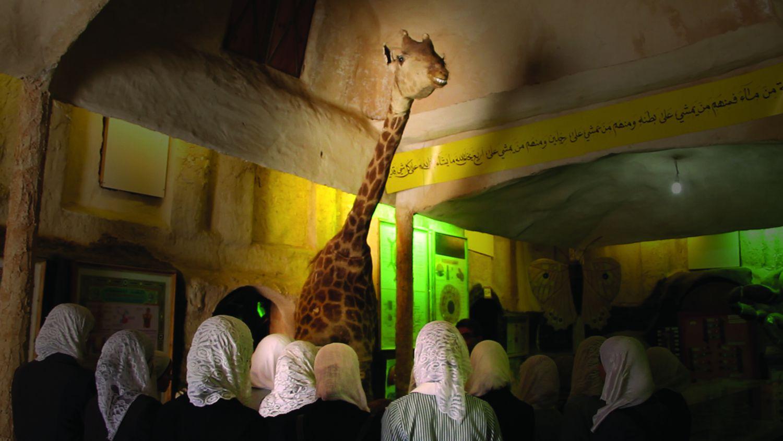 Waiting For Giraffes